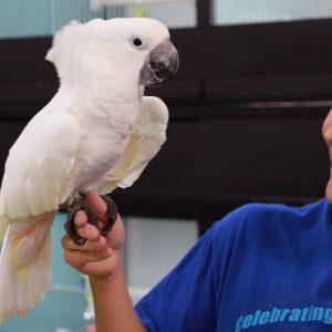 Bird boarding at Friendly Pets