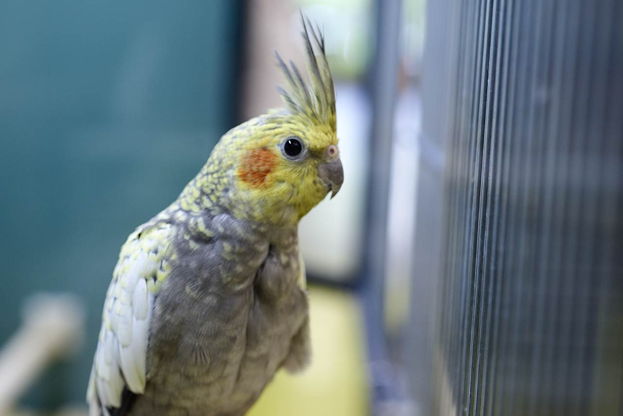 Live Animals Birds   Friendly Pets   Pet Supply Stores
