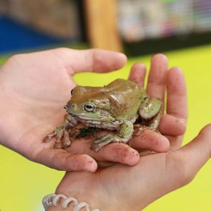 Tree Frog at Friendly Pets