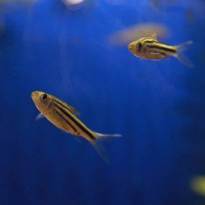 Tropical Fish at Friendly Pets, Seacoast NH
