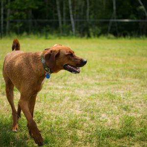 A Dog enjoying the Friendly Pets Dog Park
