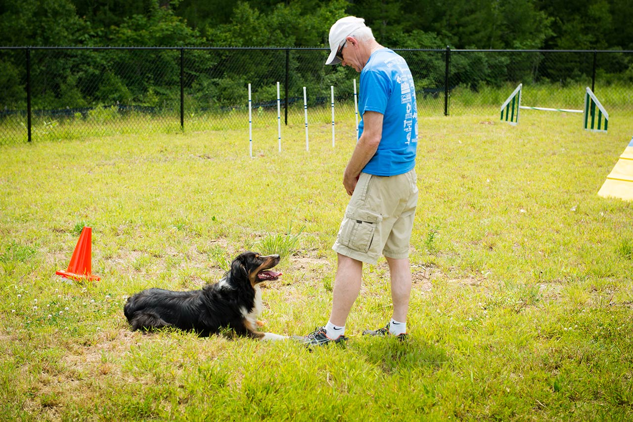 Friendly pets owner with dog at the friendly pets dog park in lee solutioingenieria Image collections