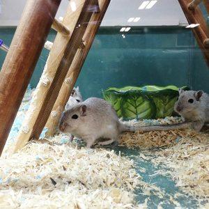 Mice at Friendly Pets, Lee NH