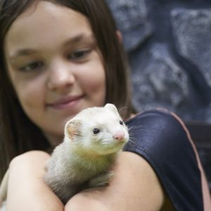Young girl with a ferret at Friendly Pets