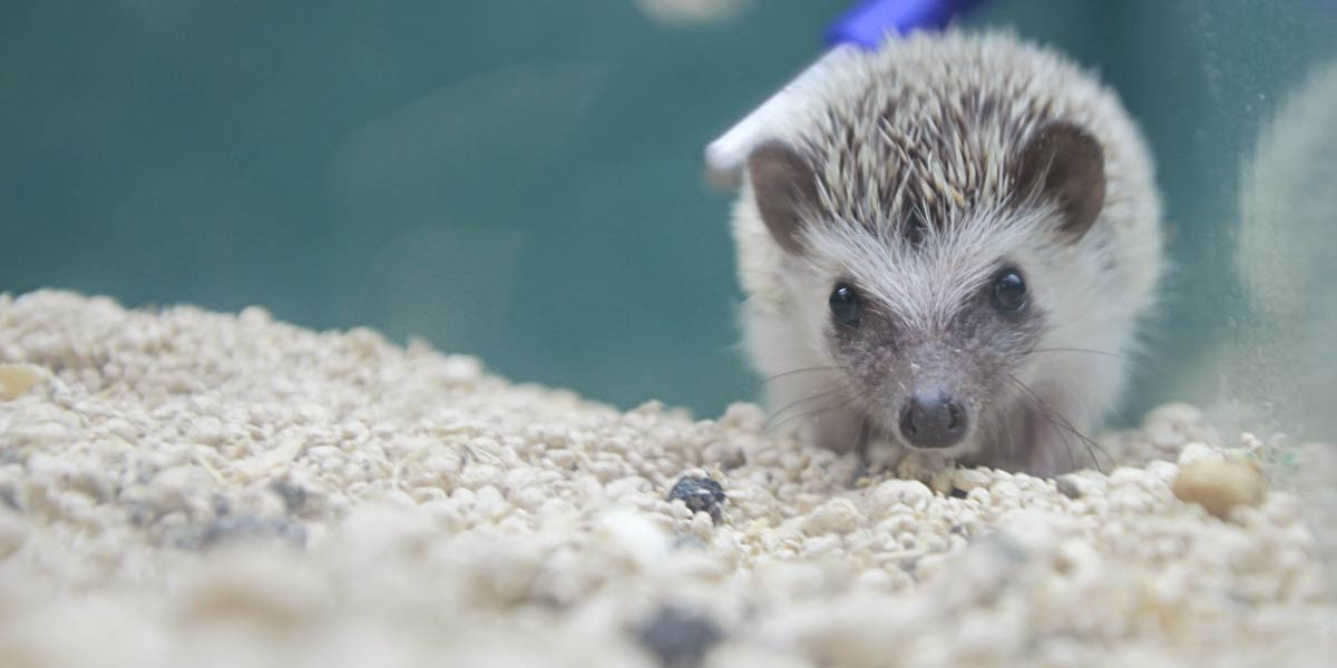 A Friendly Hedgehog at Friendly Pets