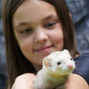 Girl with ferret at Friendly Pets