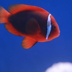 Saltwater Fish at Friendly Pets