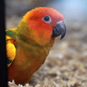 Bird at Friendly Pets