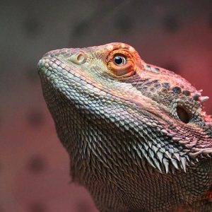 Friendly Pets | Pet & Reptile Supply Stores | Exeter, NH | Lee, NH